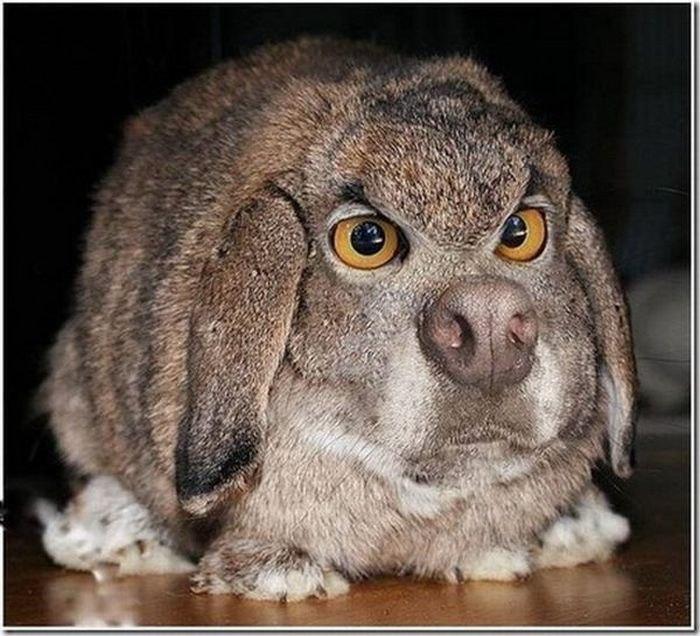 фото жирный заяц